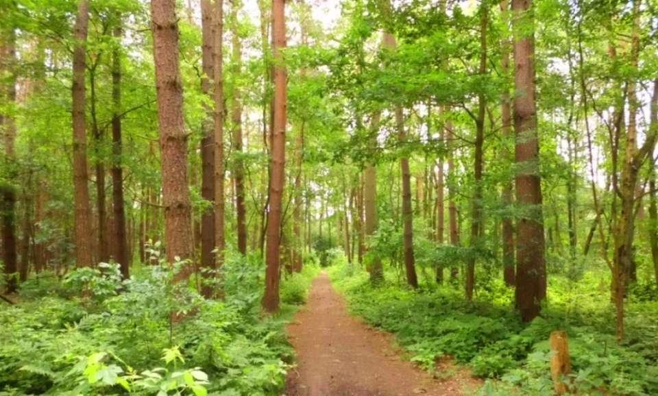 Walk in The Woods Tips